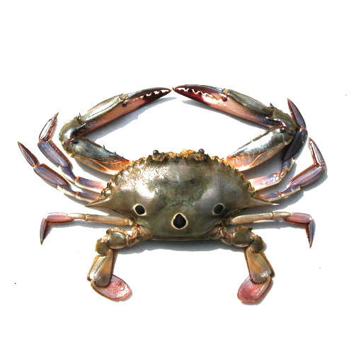 three-spotted-crab-500x500.jpg