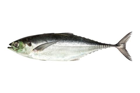 torpedo-scad-finny-scad-finletted-mackerel-scad-isolated-white-background-clipping-path-64533372.jpg