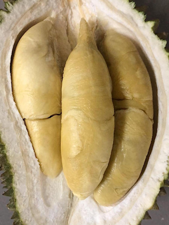 old tree kampung durian.png