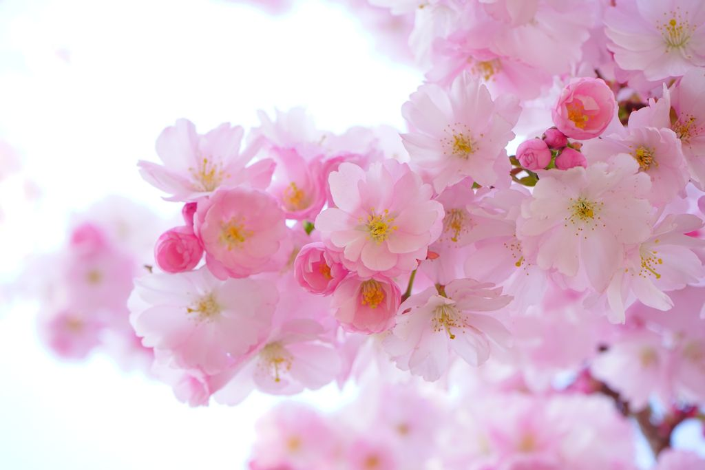 Flowers Are The Secret To Reduce The Stress - True Or False?