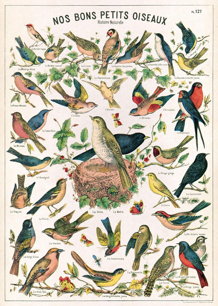 鳥類圖鑑.jpg