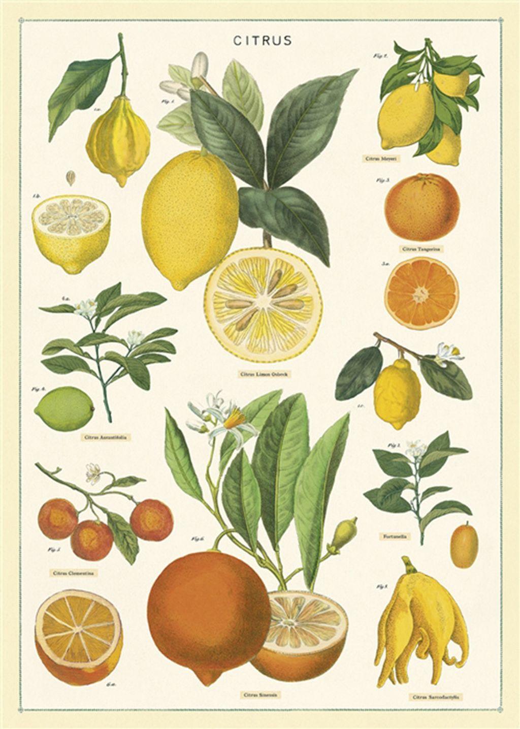 認識柑橘.jpg