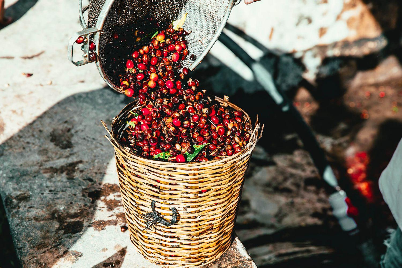 JOMO Coffee | 加入會員購物享回饋金