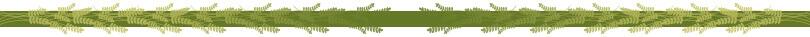 nature-overlay-divider.jpg