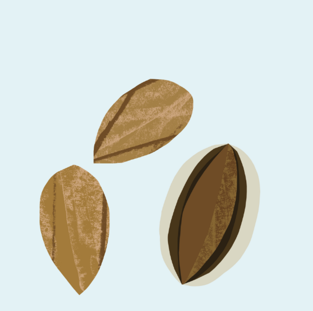 almond_2048x.png
