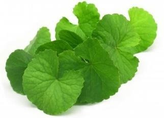How is Centella Asiatica Extract Beneficial for your Skin?   by Anatu  Herbals   Medium
