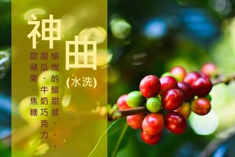神曲莊園_水洗_巴拿馬咖啡豆_咖啡豆烘焙_接單烘焙咖啡豆1000.jpg