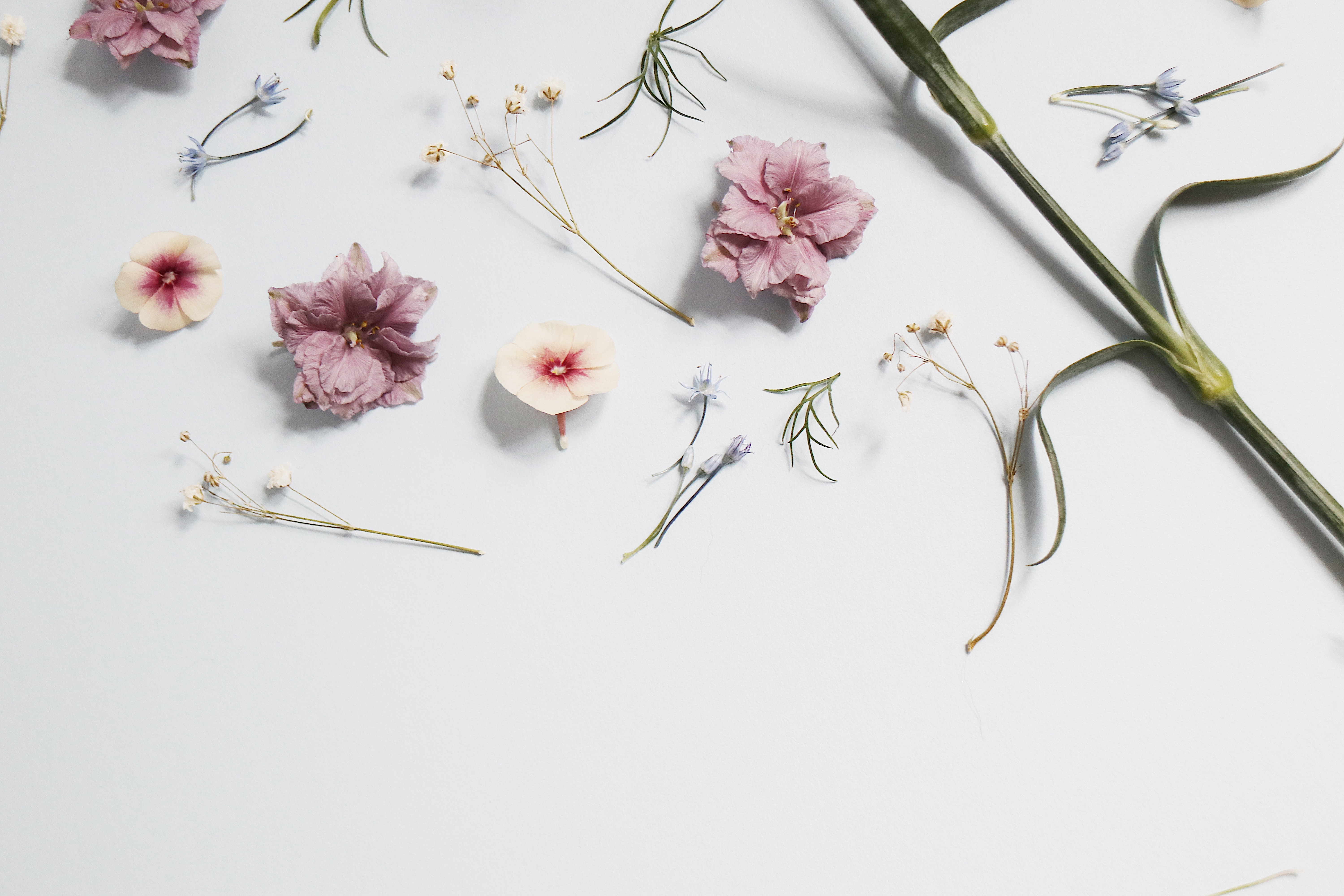 popsiclearts | Sign Up for 32% OFF on Our First Floral Printed Collection