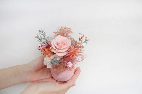 粉色盆栽10802.jpg