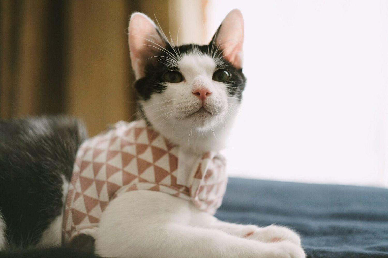 小步飛行犬貓日用良品 |