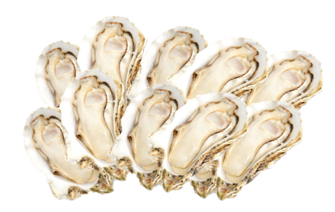 half shell oyster.PNG