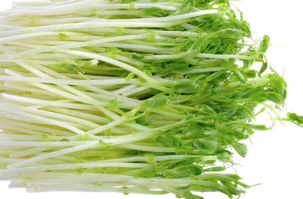 PEA SPROUT.png