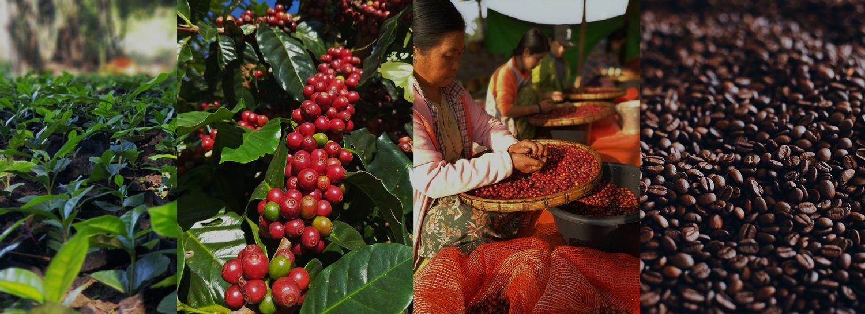 BCC BAN CHUAN | Own Coffee Bean Processing Plant