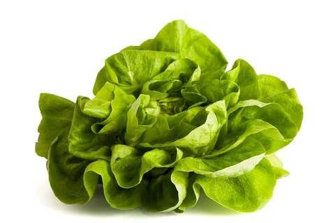 bibb-lettuce