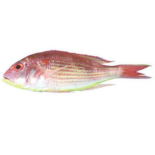 Ikan Kerisi Merah Kecik – DIJ Fresh Mart