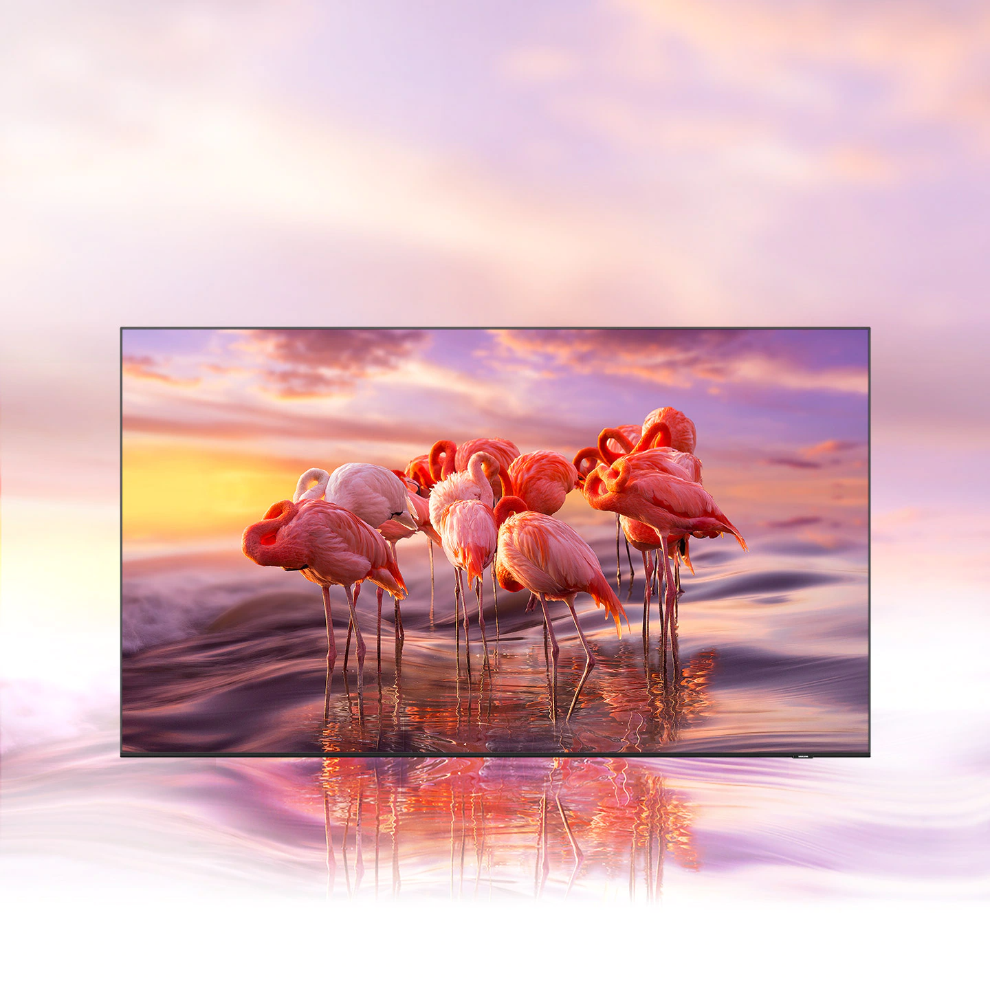 QLED TV displays an intricately coloured image of flamingos to demonstrate colour shading brilliance of Quantum Dot technology.