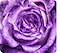 A close-up taken with the Macro Camera, showing the details and each layer of a violet flower.