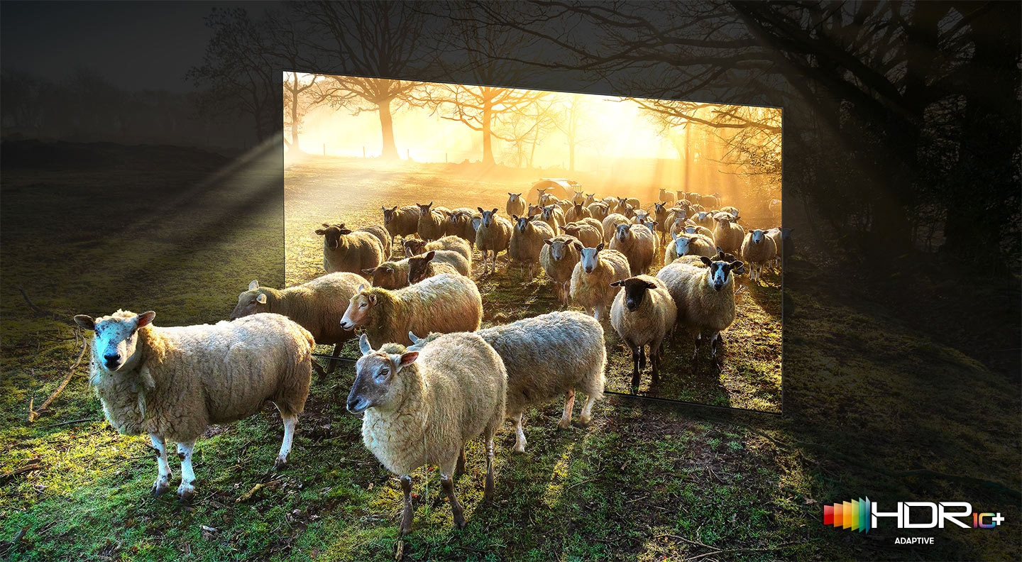 Many sheep in the wide sunny fields are walking out from inside the TV frame. QLED TV shows accurate representation of bright and dark colours by catching small details