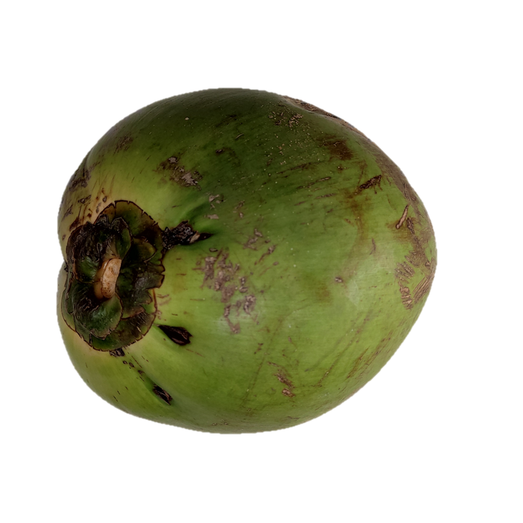 Coconut 2.png