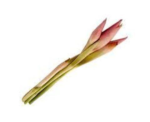 Ginger Flower.jpg