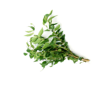Curry Leaves.png