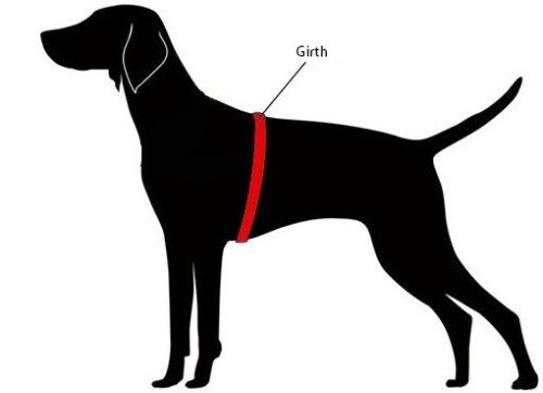 how-to-measure-dog-for-correct-harness-size.png