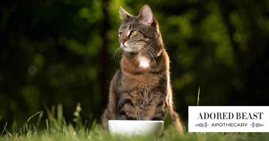 Probiotics For Cats: Show The Gut Some Love