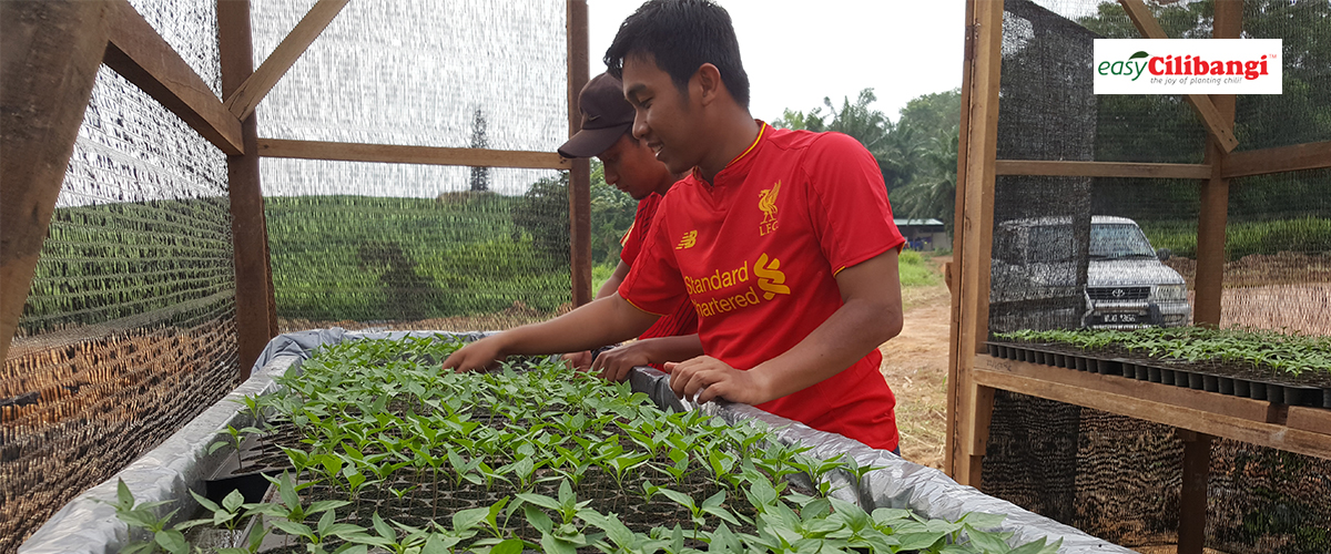 Cilibangi - One Stop Centre Agriculture Solution | TANAM CILI