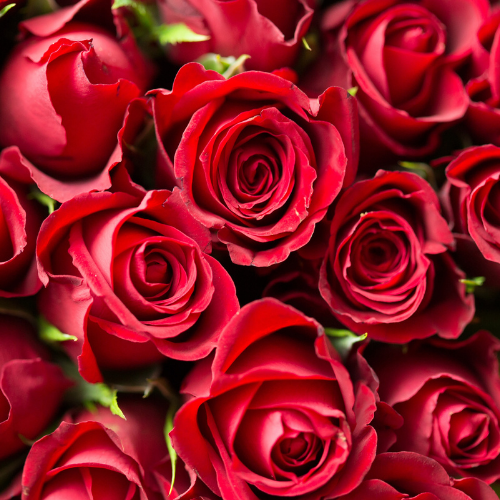 Red Roses.png