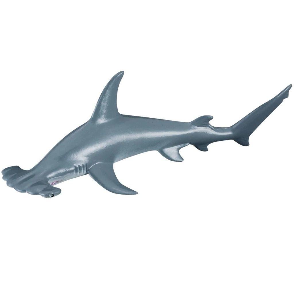 Scalloped hammerhead shark.jpeg