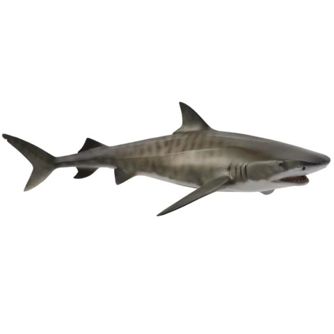 Tiger shark.jpeg
