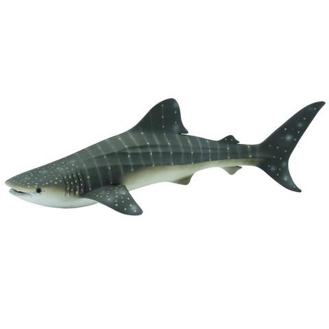 whale shark.jpeg