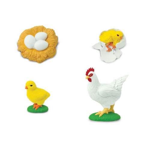 Life cycle - chicken 3.jpg