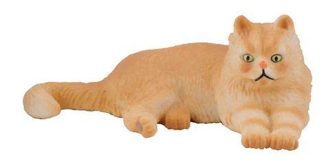 Persian Cat Lying.jpg
