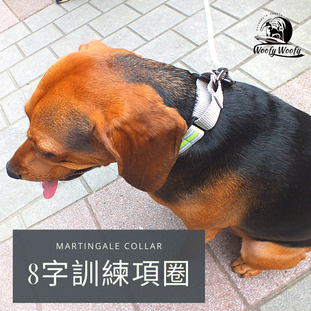 Martingale collar -灰-皮皮.png