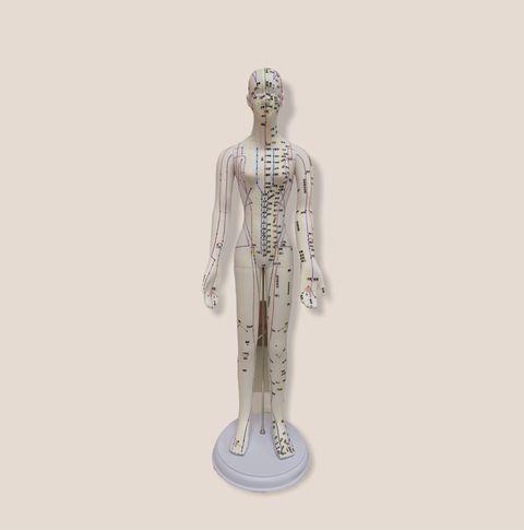 穴位人體模型1.jpg