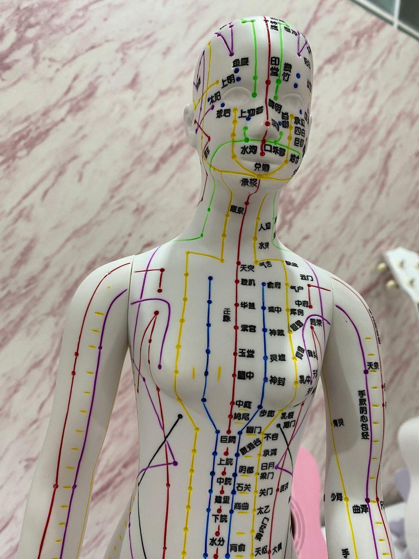 穴位人體模型3.JPG