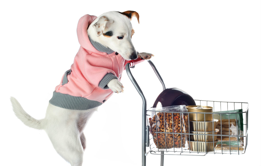 Pets-on-a-Budget-Best-Places-to-Find-Cheap-Dog-Products.jpg