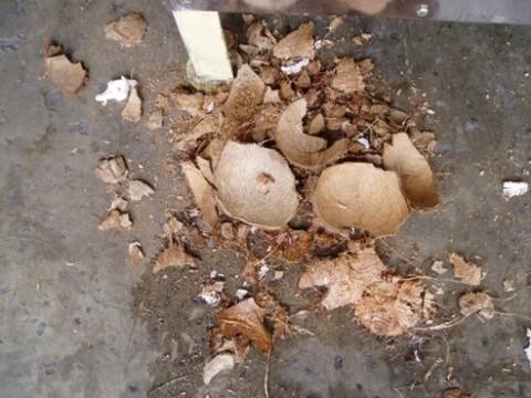 5-Coconut Husk Remover CHR1.jpg