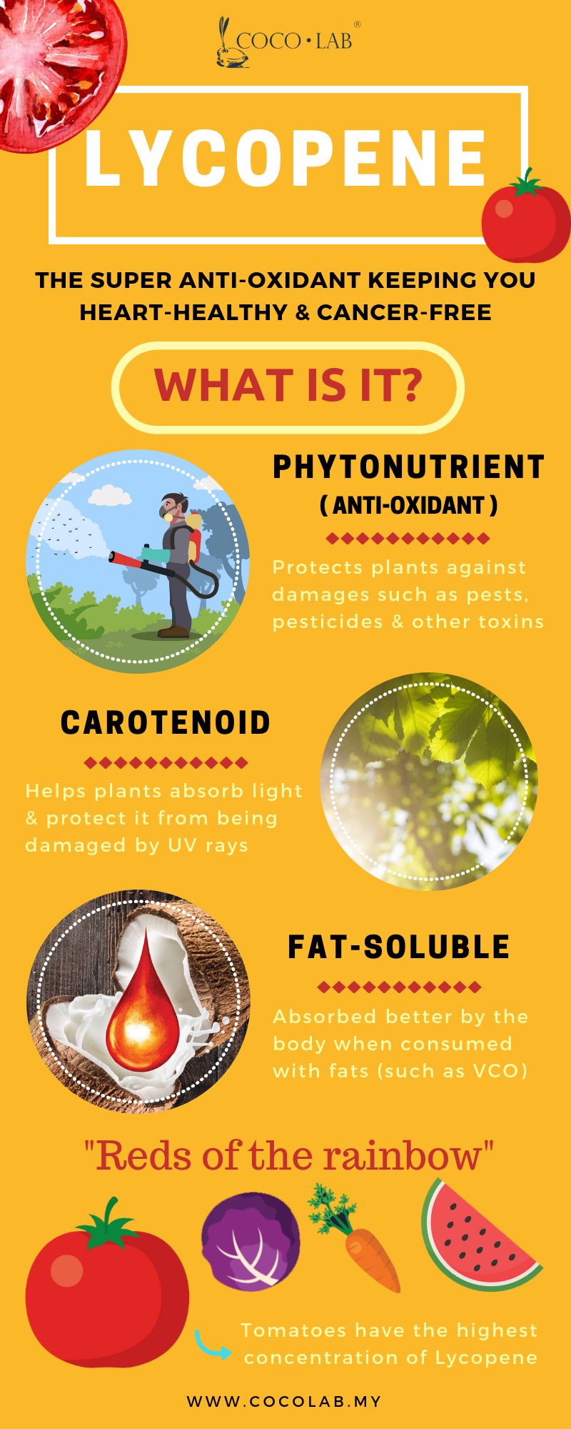 Lycopene Infographic by COCOLAB - pg 1.png