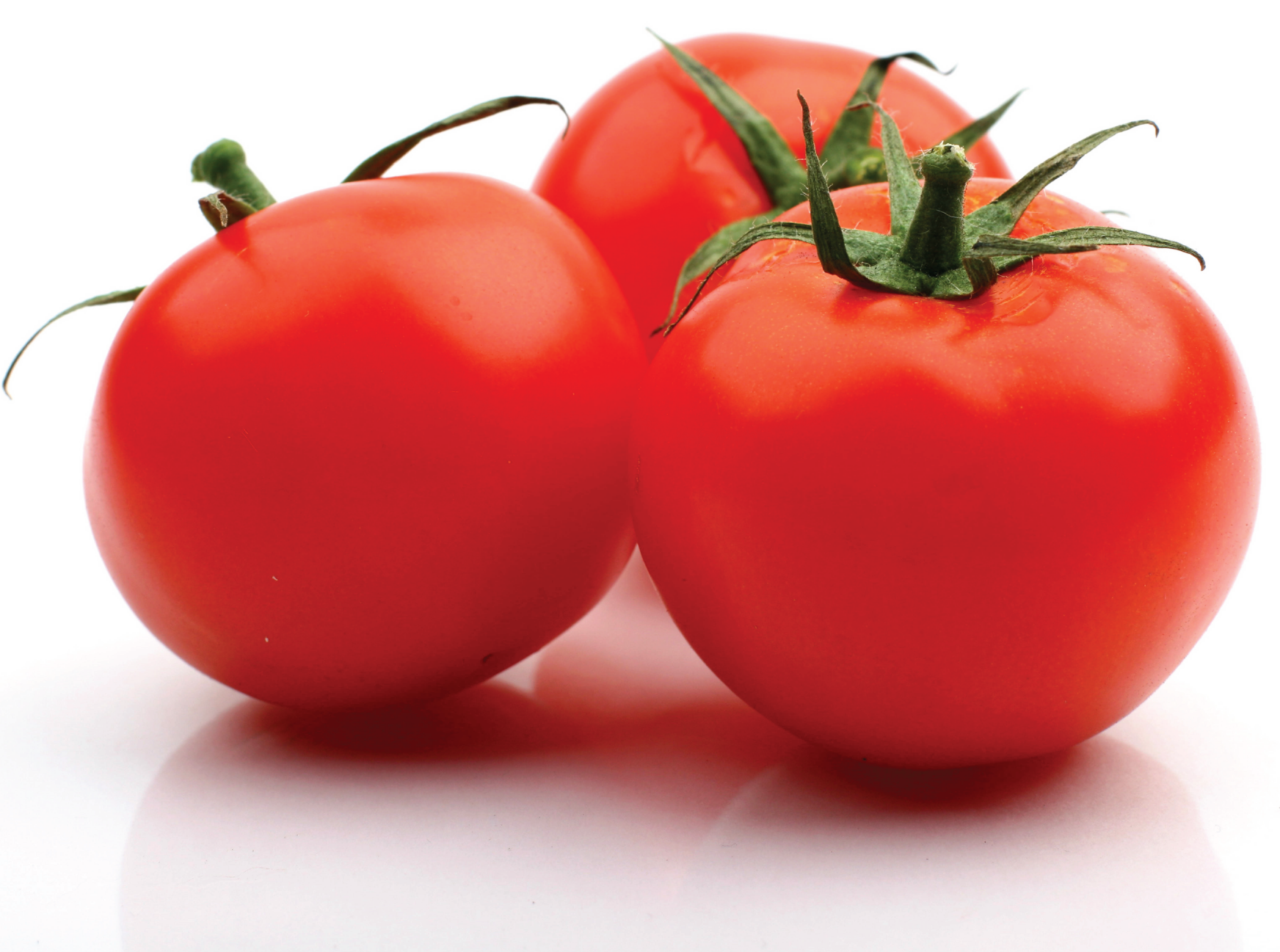 TOMATO FOR WEBSITE.png