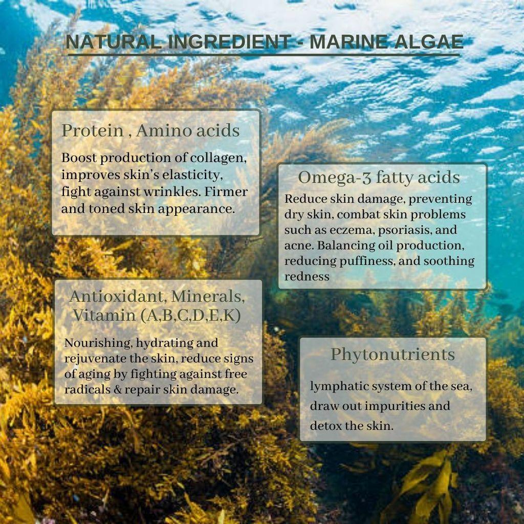 marine algae (DIY)-ENG - raw mat,natural,steps (5).jpg