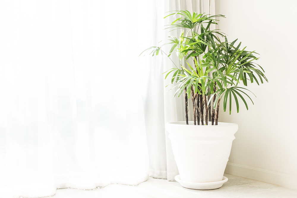 potted-green-plants.jpg