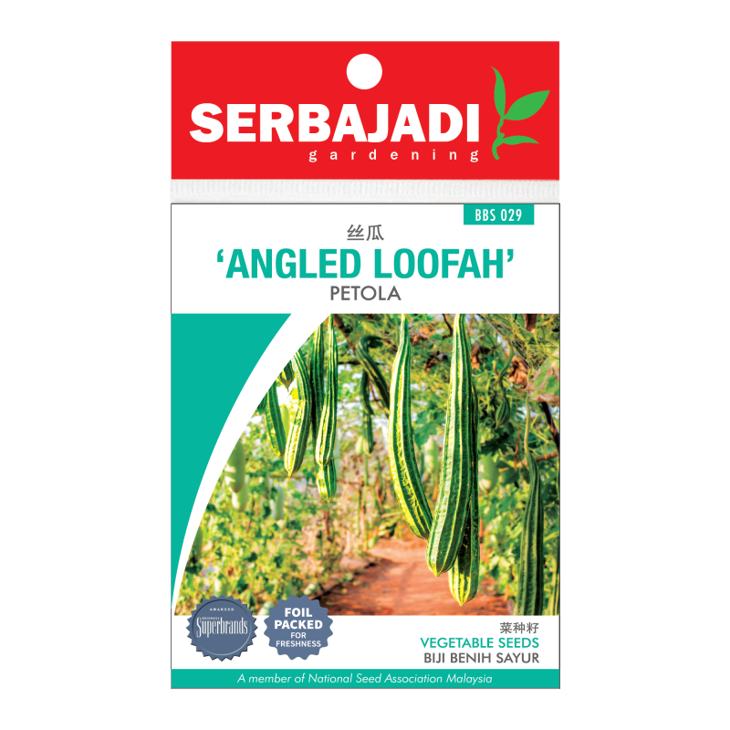 angled loofah-29 (front)-800x800.png