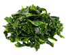 web seaweed.png