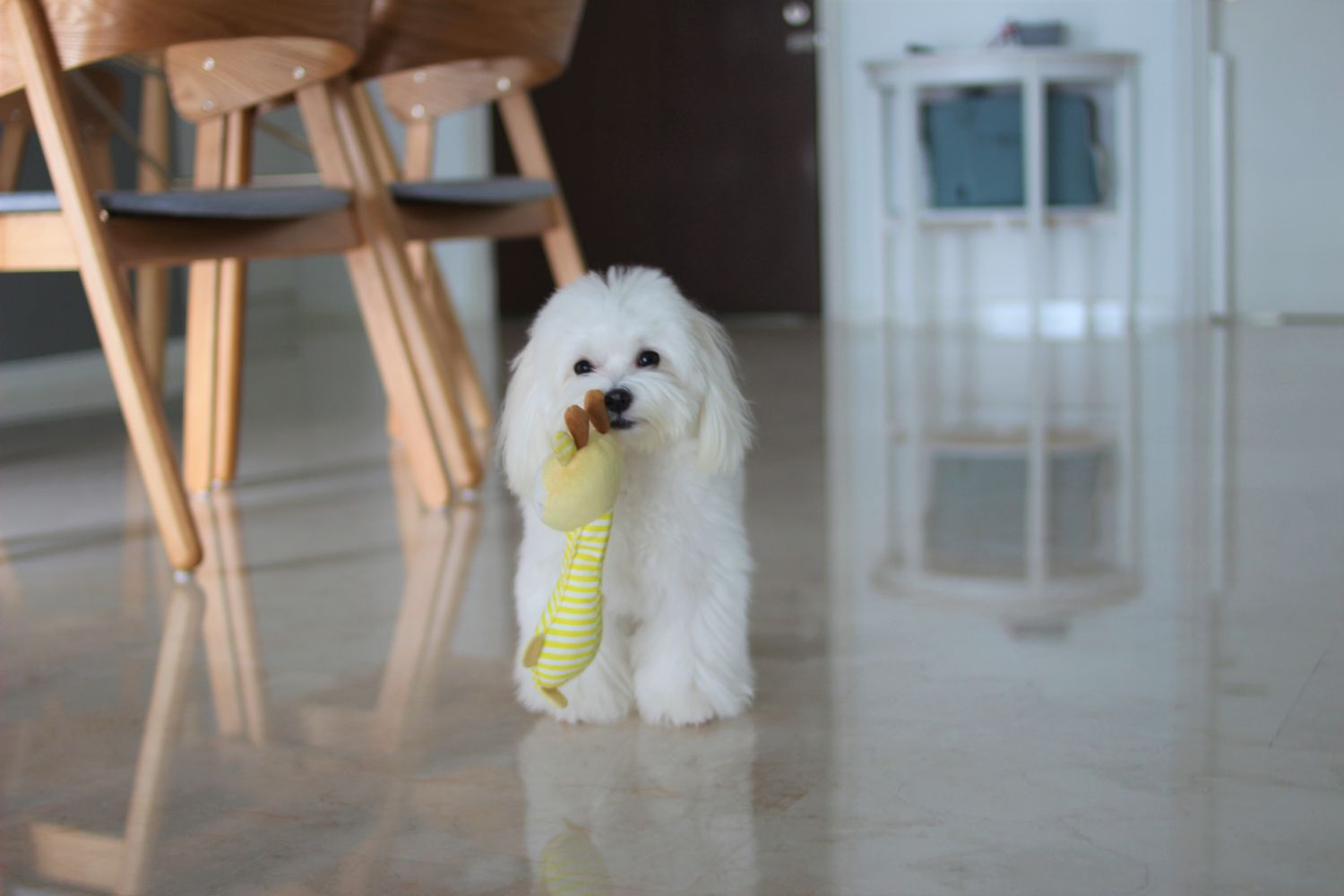 LattePup   Curated Online Pet Store based in Malaysia - Say No to Dirty Toys