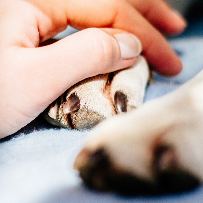 LattePup   Curated Online Pet Store based in Malaysia    - SKIN CARE