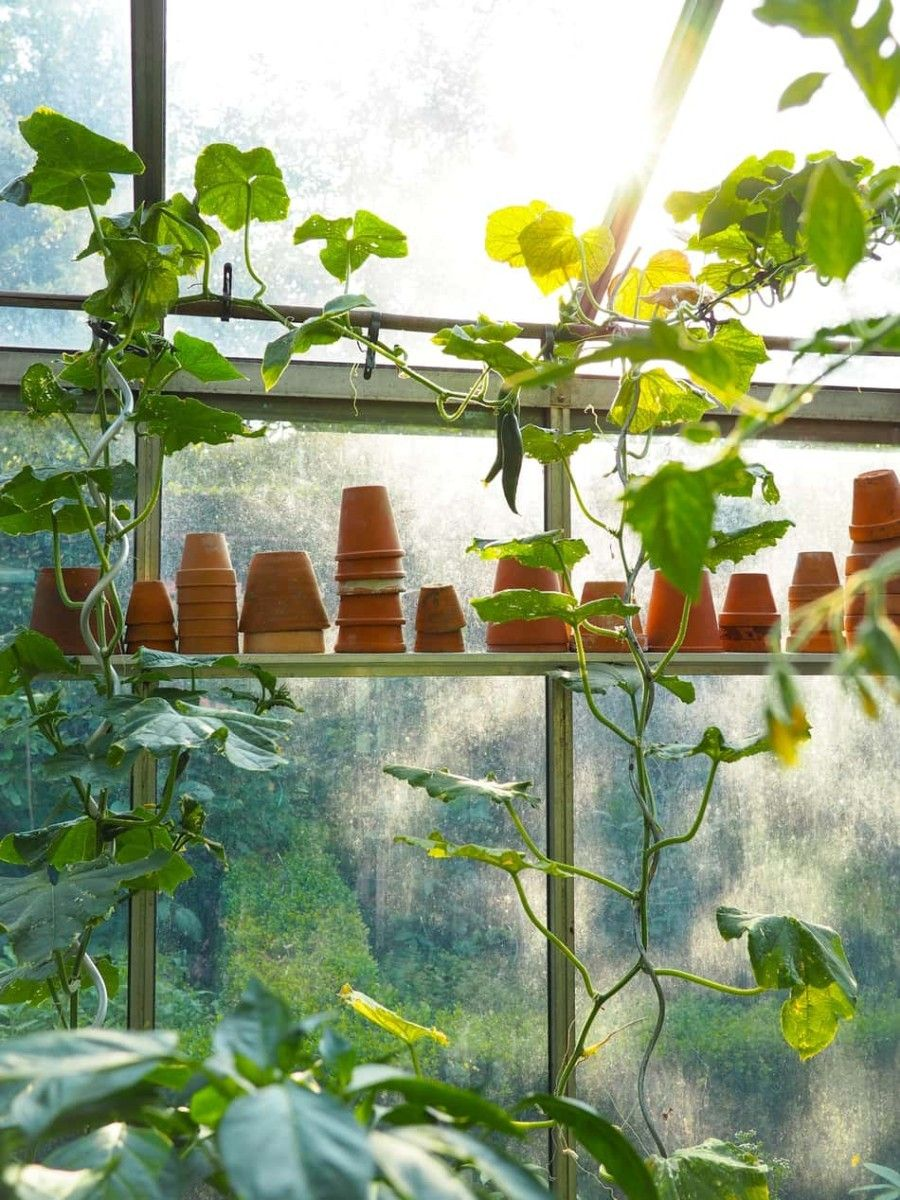 How much sun does a greenhouse need? – Greenhouse Today.jpg