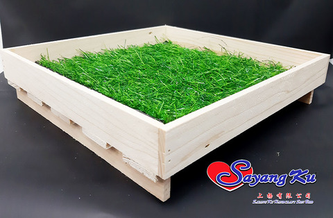 tray with grass.jpg